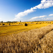 Wheaten field — Stock Photo #14607527