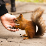 Feeding of a squirrel — Stock Photo #14736545