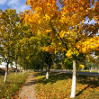 Park. autumn — Stock Photo