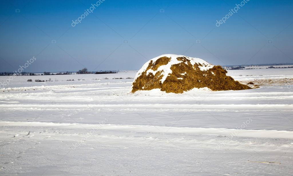 The stack of straw covered with snow in a winter season — Stock Photo #16230147