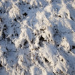 Plants under snow — Stock fotografie
