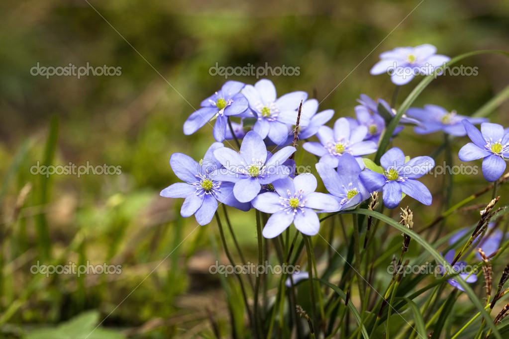 Sous-bois fleurs — Photographie ligora © #17387795