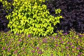 Różne krzewy — Zdjęcie stockowe