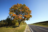 The autumn road — Stockfoto