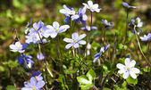 Blue glades — Stock Photo