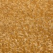 Stock Photo: Mature wheat