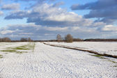 Field in the winter — Stock Photo
