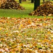 Stock Photo: Collecting fallen-down foliage