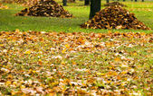 Collecting the fallen-down foliage — Stock Photo