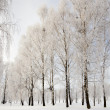 Winter forest — Stock Photo #22210537