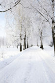 The winter road — Stock Photo