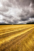 Slanted flax — Stock Photo