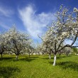 Stock Photo: Blossoming garden