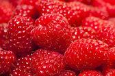 Ripe raspberry — Stockfoto