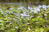 Blossoming glades — Stock Photo