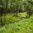 The trees growing in the territory of a bog — Stock Photo #33534565