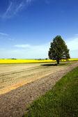 árvore no campo — Foto Stock