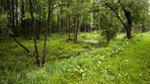 The trees growing in the territory of a bog — Stock Photo