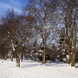 Winter forest — Stock Photo #34402137