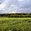 An agricultural field — Stock Photo
