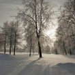 Trees in winter — Stock Photo #36740197