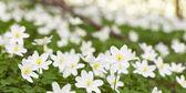 Glades flowers — Stock Photo