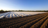 Agriculture (greenhouses) — Stock Photo
