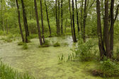The marshland — Stock Photo