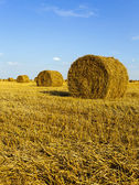Straw stack — Foto Stock