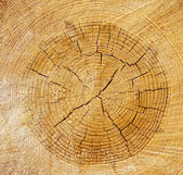 Old sawn tree — Stock Photo