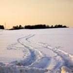Traces on snow — Stock Photo #4662714