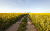 The road to a field — Stock Photo