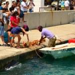 turistas de las compras de recuerdos de concha — Foto de Stock