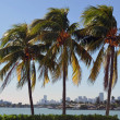SoBe Tropical Views — Stock Photo