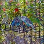 Постер, плакат: Birds of a Feather