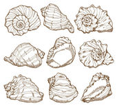 Hand drawing seashell set — Stock Vector