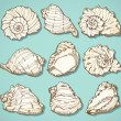 Seashell set in vintage style — Stock Vector
