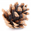 Stock Photo: Evergreen pinecone.