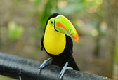 Sitting toucan — Stock Photo