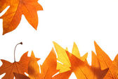 Bright fall leaves background — Stock Photo