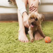 Young woman with her yorkshire terrier dog at home — Stock Photo