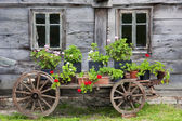 Old wagon full of flowers — Stock Photo