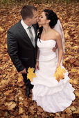 Wedding theme, the bride and groom are in the maple leaves on gr — Stock Photo