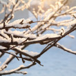 Stock Photo: Frost and snow on the branches, winter background