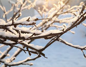 Frost and snow on the branches, winter background — Stock Photo
