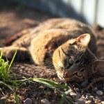 Cat lying on the ground — Stock Photo