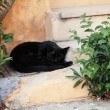 Black cat sleeping on the streets of Greece, Athens — Stock Photo