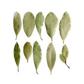 Aromatic dry bay leaves on white background. — Stock Photo