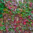 Autumn background, colorful leaves over wooden fence — Stock Photo