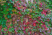 Autumn background, colorful leaves over wooden fence — Photo